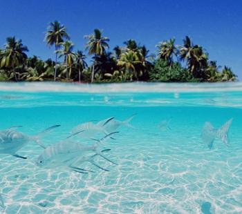 Pacote de Viagem Punta Cana