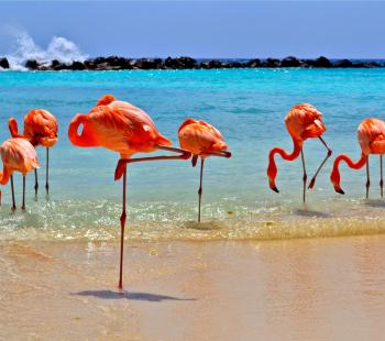 Pacote de Viagem Aruba
